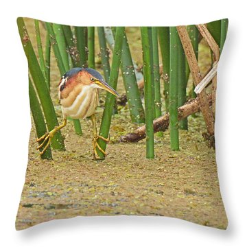 Least Bittern With Large Feet Throw Pillow by Alan Lenk