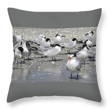 Least Terns Throw Pillow by Melinda Saminski