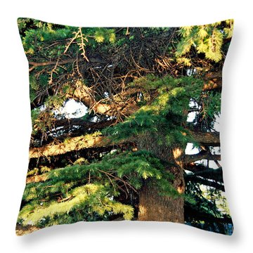 Lebanese Cedar Throw Pillow