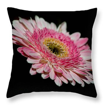 Left In The Dark Throw Pillow by Trish Tritz