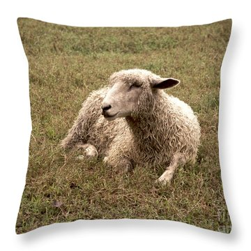 Leicester Sheep In The Dewy Grass Throw Pillow