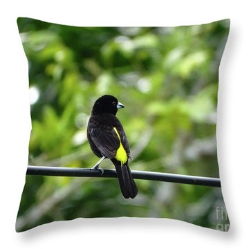 Lemon-rumped Tanager Throw Pillow