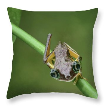 Throw Pillow featuring the photograph Lemur Tree Frog - 1 by Nikolyn McDonald