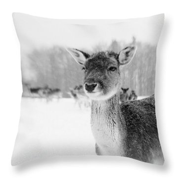 #lensbaby #composerpro #sweet35 Throw Pillow
