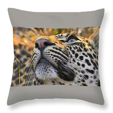 Leopard Aloft Throw Pillow