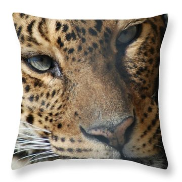 Throw Pillow featuring the photograph Leopard Face by Richard Bryce and Family