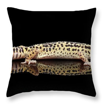 Leopard Gecko Eublepharis Macularius Isolated On Black Background Throw Pillow by Sergey Taran