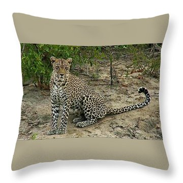Leopard  Throw Pillow