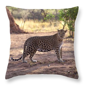 Leopard Throw Pillow by Keith Levit