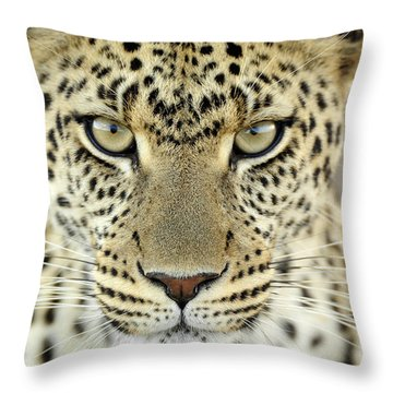 Leopard Panthera Pardus Female Throw Pillow by Martin Van Lokven