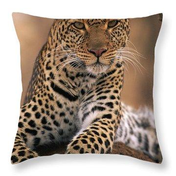 Leopard Panthera Pardus, Masai Mara Throw Pillow by Anup Shah