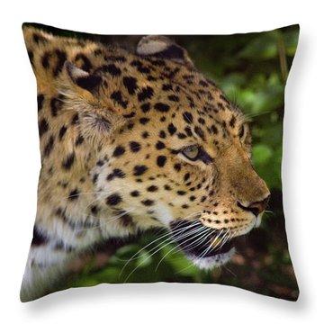 Throw Pillow featuring the photograph Leopard by Steve Stuller