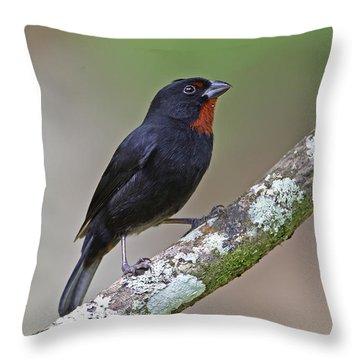 Lesser Antillean Bullfinch Throw Pillow