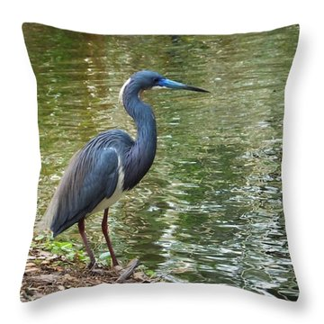Lesser Blue Heron In Mating Plumage Throw Pillow by Judy Wanamaker
