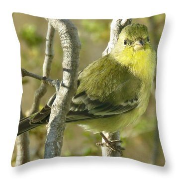 Lesser Goldfinch 1 Throw Pillow