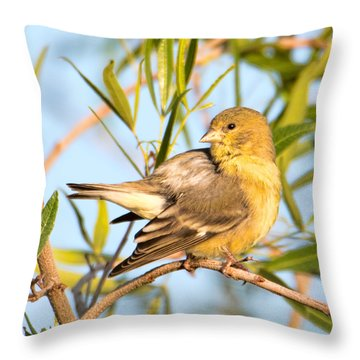 Throw Pillow featuring the photograph Lesser Goldfinch by Dan McManus