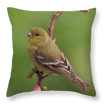 Lesser Goldfinch Throw Pillow by Doug Herr