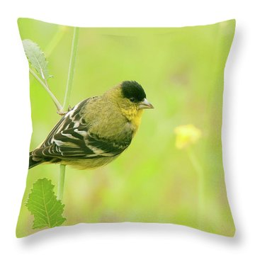 Throw Pillow featuring the photograph Lesser Goldfinch  by Ram Vasudev