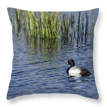 Lesser Scaup Adult Male Throw Pillow