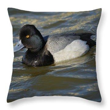 Lesser Scaup Drake Throw Pillow