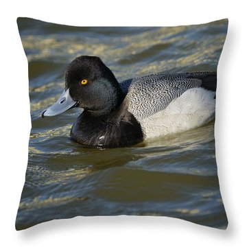 Lesser Scaup Drake Throw Pillow