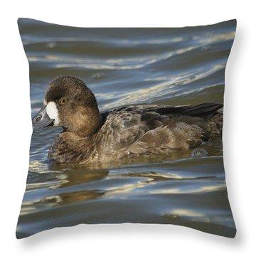Lesser Scaup Hen Throw Pillow