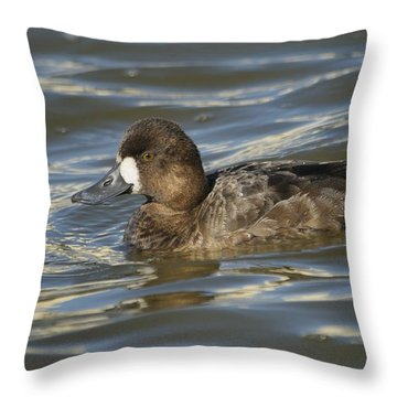Lesser Scaup Hen Throw Pillow