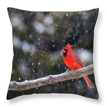 Throw Pillow featuring the photograph Let It Snow by Mircea Costina Photography