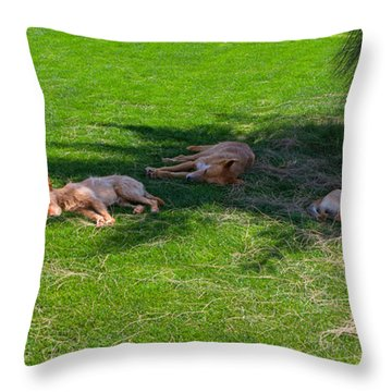 Let Sleeping Dogs Lie Throw Pillow by Louise Heusinkveld