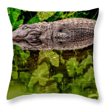Let Sleeping Gators Lie Throw Pillow by Christopher Holmes