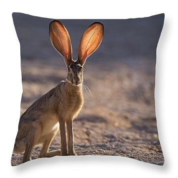 Let The Sun Shine Through Throw Pillow by Sue Cullumber