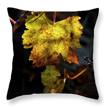 Throw Pillow featuring the photograph Let The Sunshine In by Elaine Teague