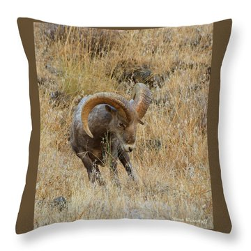 Let's Go Throw Pillow