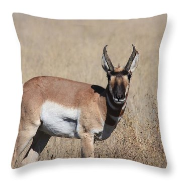 Let's Rumble Throw Pillow