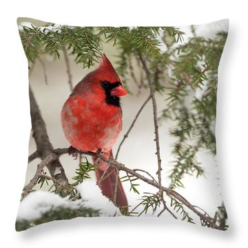Throw Pillow featuring the photograph Leucistic Northern Cardinal by Everet Regal