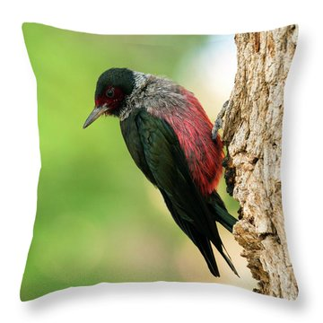 Lewis Woodpecker Throw Pillow