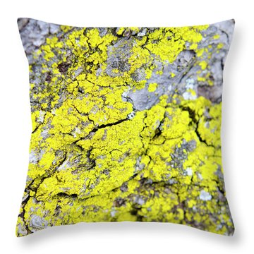 Lichen Pattern Throw Pillow by Christina Rollo