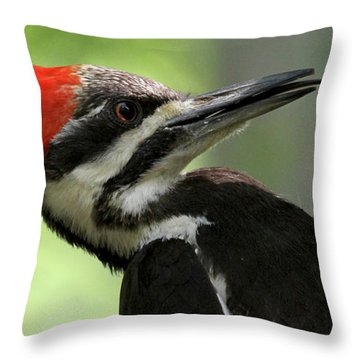 Lick It Up - Pileated Woodpecker Throw Pillow