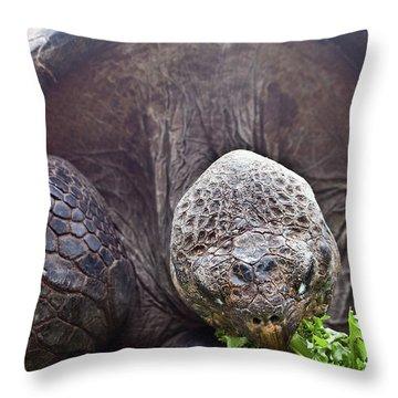 Throw Pillow featuring the photograph Life Begins At 60 For Vegetarian by Miroslava Jurcik