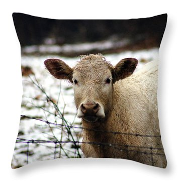 You Know It's You ,who Calls Me Back Here Babe Throw Pillow