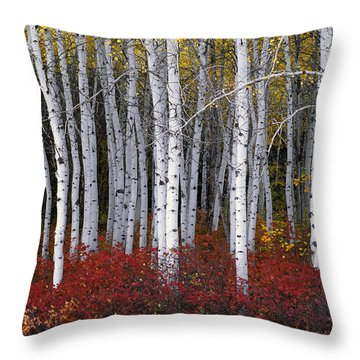 Light In Forest Throw Pillow