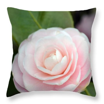 Light Pink Camellia Flower Throw Pillow