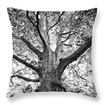 Light, Shadows And Texture Throw Pillow by Karen Stahlros