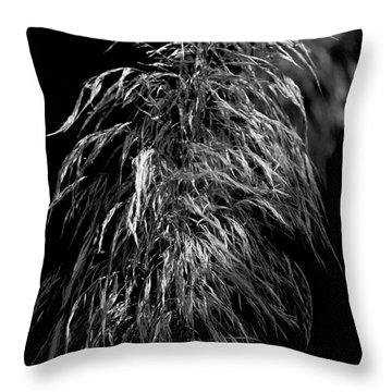 Throw Pillow featuring the photograph Light Shadows by Eric Christopher Jackson