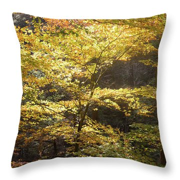 Throw Pillow featuring the photograph Light In The Leaves by Kirkodd Photography Of New England