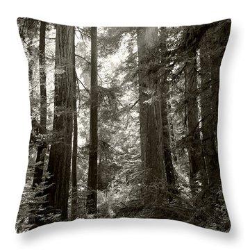 Light Through Redwoods Throw Pillow by Kathleen Grace