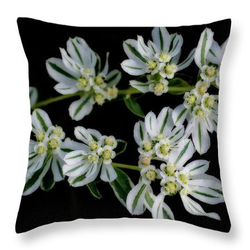 Lights In The Darkness Throw Pillow