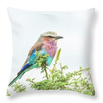 Lilac Breasted Roller. Throw Pillow