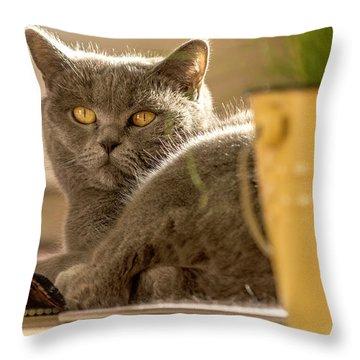 Lilli The Cat Throw Pillow
