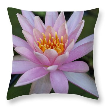 Lilly In Pink Throw Pillow